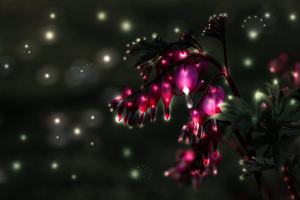 kytky srdíčka